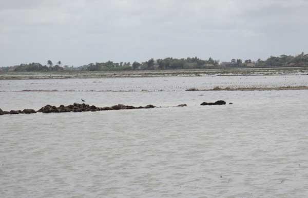 tidal-waves