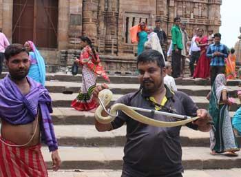cobra-in-lingraj-temple