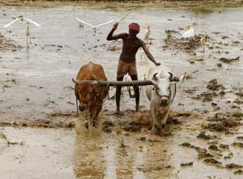 ploughing-time