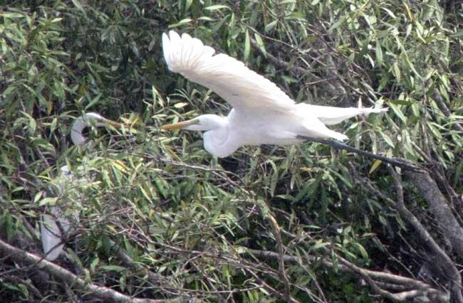 bhitarkanika-birds