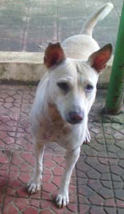 stray-dog