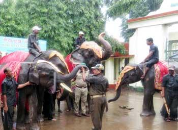 world-elephant-day