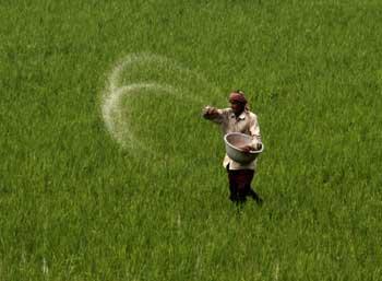 applying-fertilizer