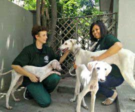 mudhol-hounds