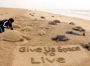 protect-sea-turtles