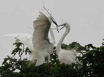 making-nest