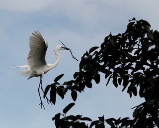 egret-in-monsoon