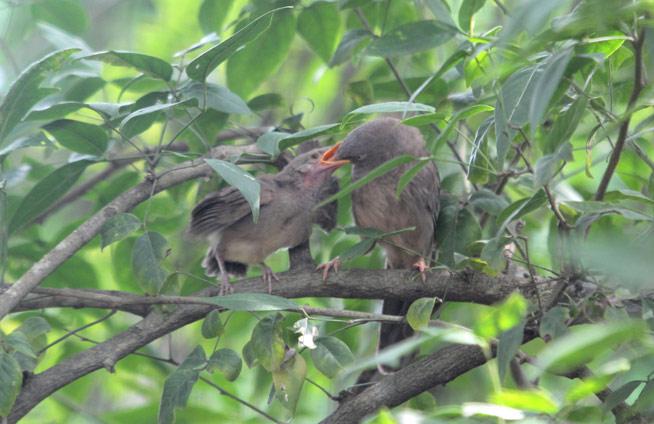 nature_odisha