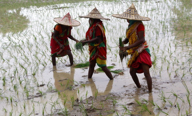 odisha_farmers