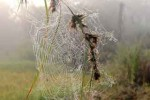 spider-nest