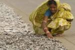 drying-fish